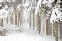 雾与树1.jpg