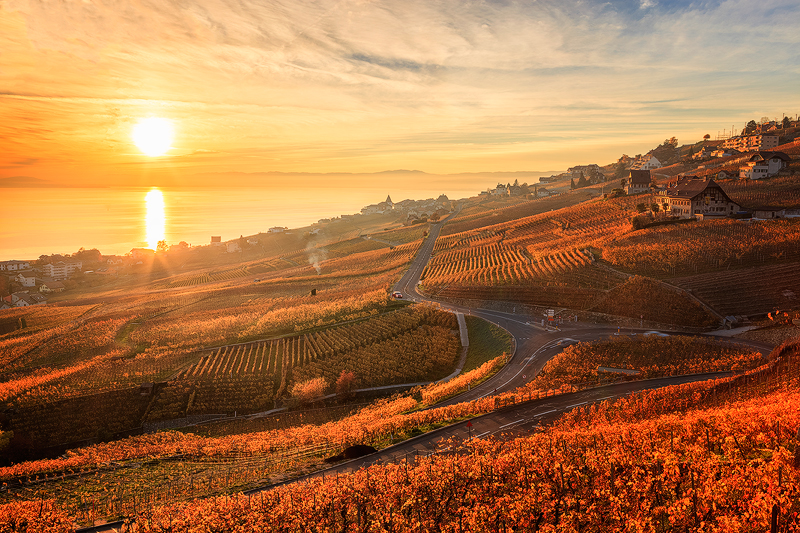 Lavaux-Vineyard11