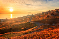 Lavaux-Vineyard11