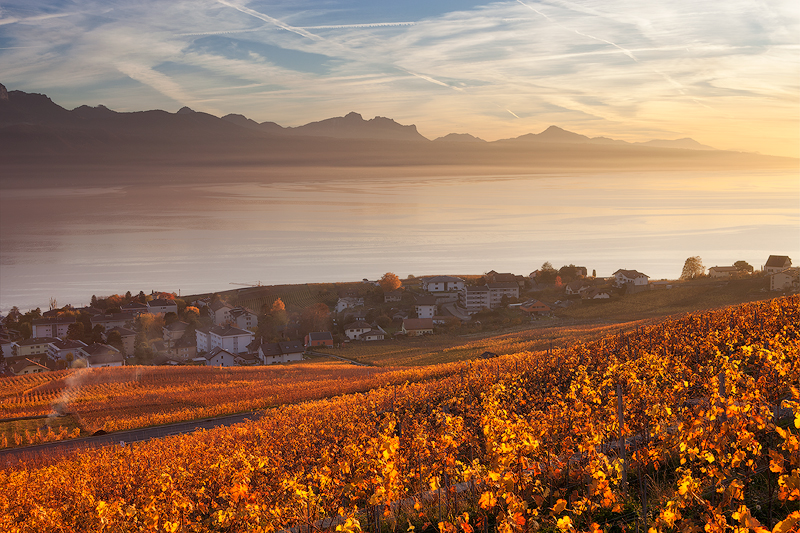 Lavaux-Vineyard43