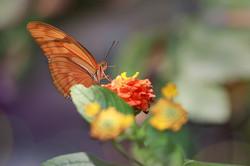 蝴蝶3.jpg