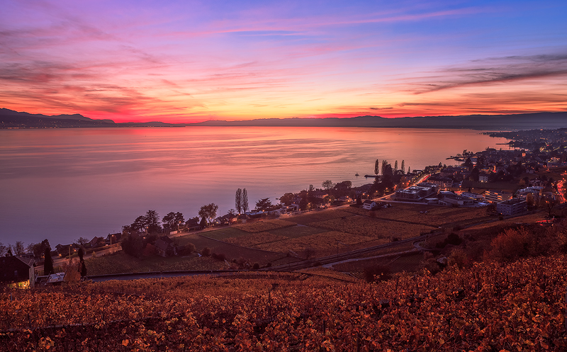 Lavaux-Vineyard1
