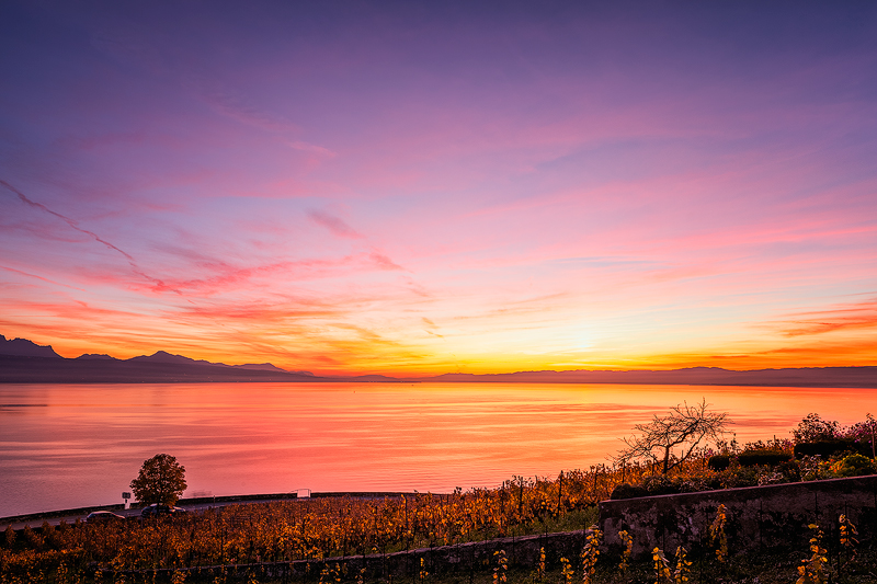 Lavaux-Vineyard3