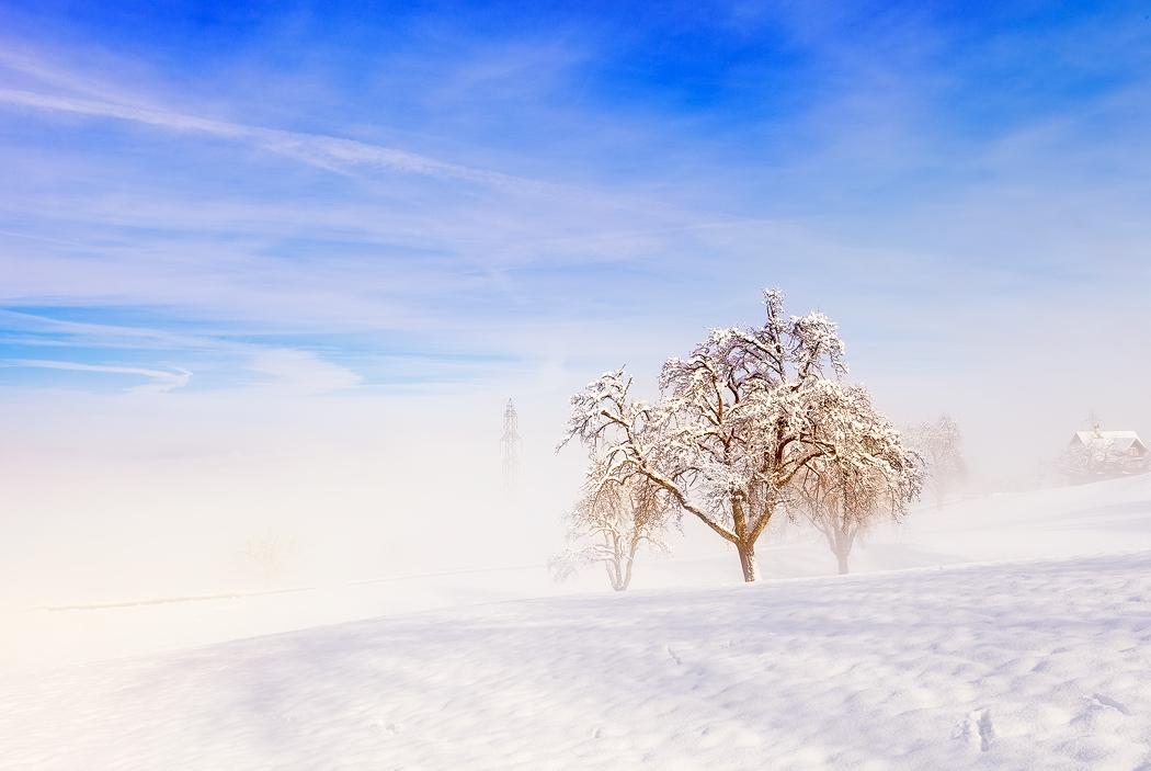 雾松2.jpg