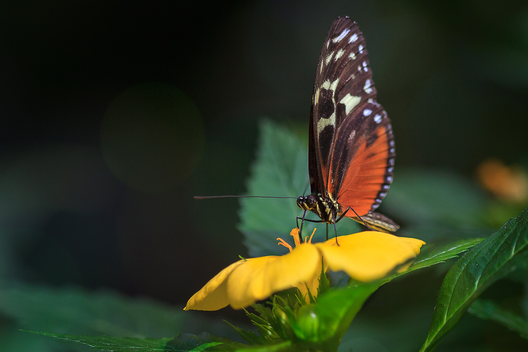蝴蝶4.jpg