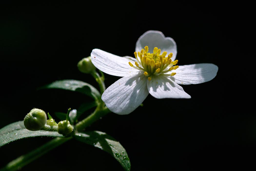 野花1.jpg