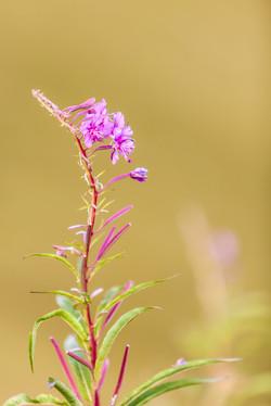 WILD-FLOWER2s.jpg