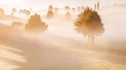 雾中的树.jpg