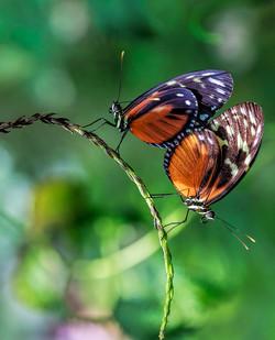 蝴蝶8.jpg