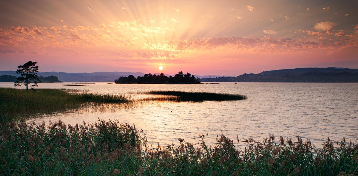 芦苇、夕阳湖水.jpg
