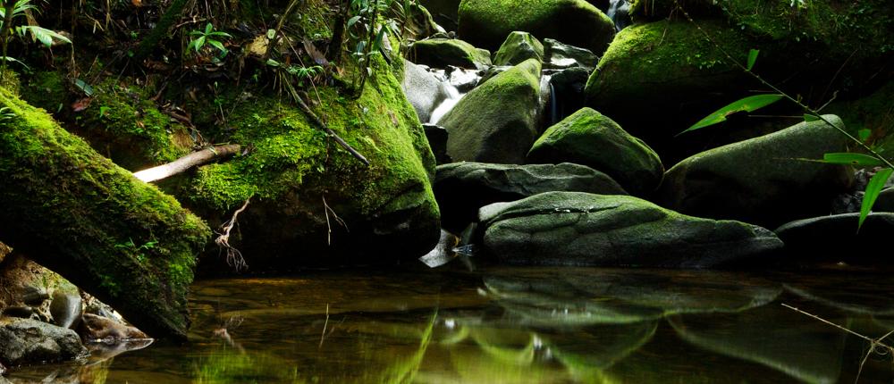 Bornean Serenity