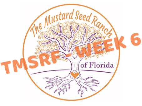 TMSRF - WEEK 6