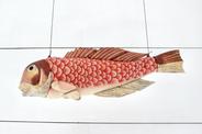 Fish_ Amadai
