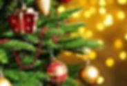 close up tree.jpg