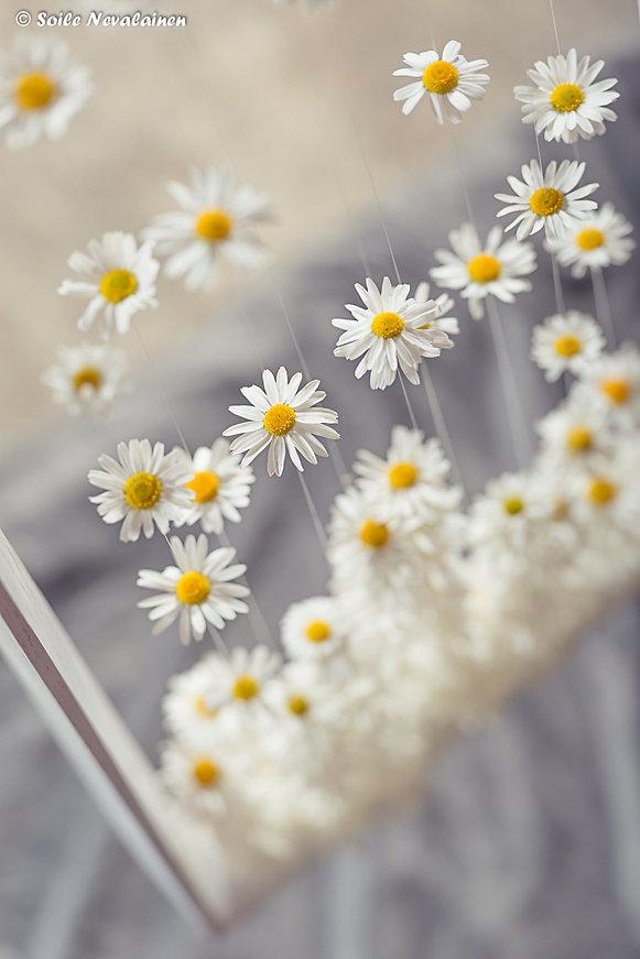Beautiful blooms5.jpg