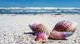 seashell-2821388_1920.jpg