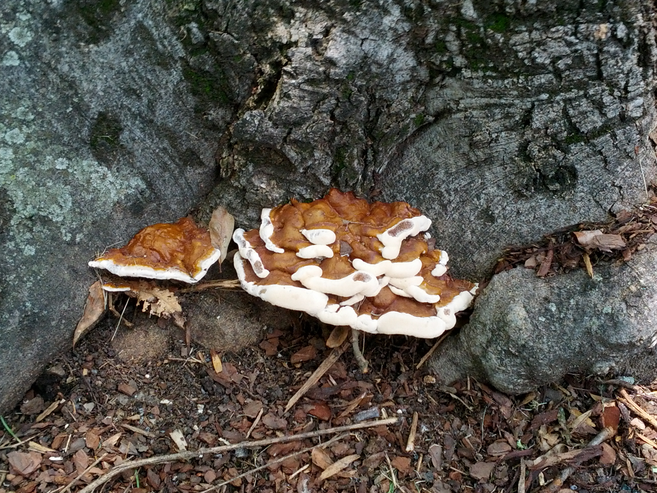 Fungus Fruiting Body