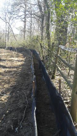 Construction near Trees