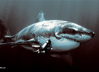 Hello BIG ASS SHARK!
