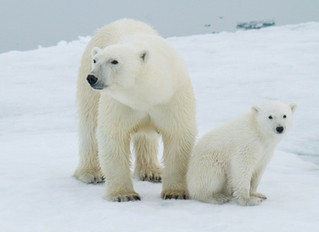 A Different Kind of Polar Bear Experience