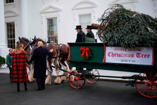 Docked Horses Deliver White House Christmas Tree