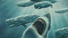 Do you believe Megalodons still exist?