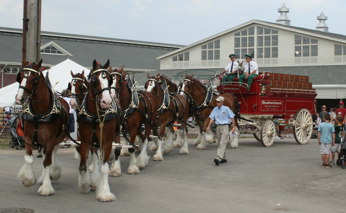 Budweiser Clydesdales in 2018 Rose Parade