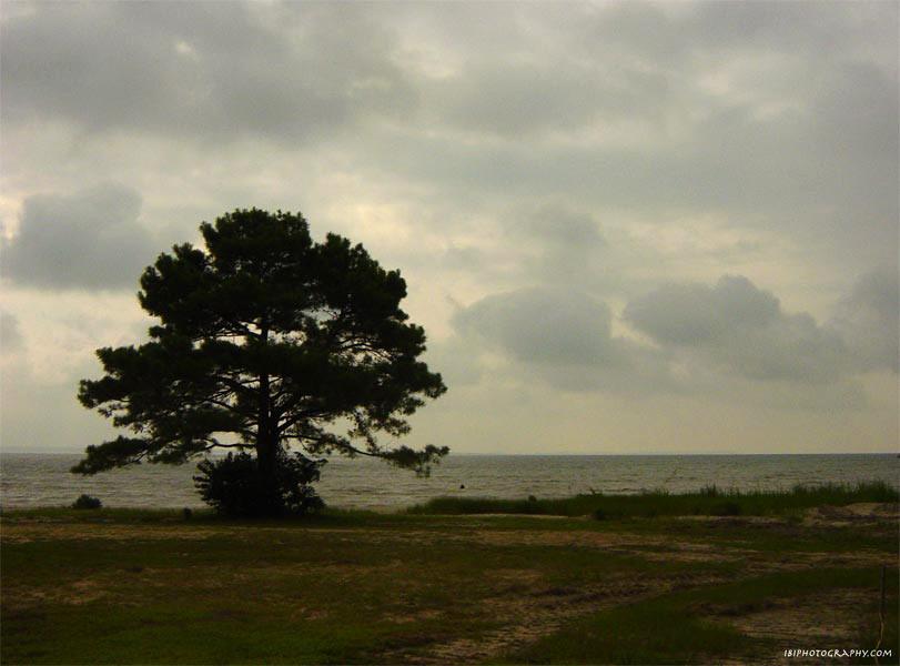 Virginia shoreline