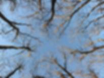 Trees in Sky _ smaller left tree_ w ligh