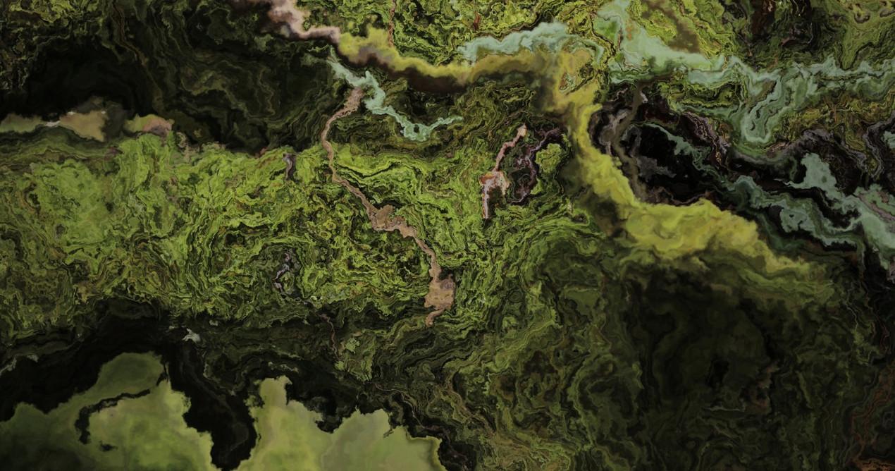 forest3 (Large).jpg