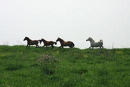 omega cheval, oméga pour cheval, supplément oméga cheval