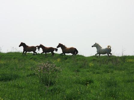 Mikä erottaa ihmisen eläimestä
