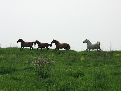TCAS: Cinco mil euros de danos morais por morte de cavalos em feira municipal