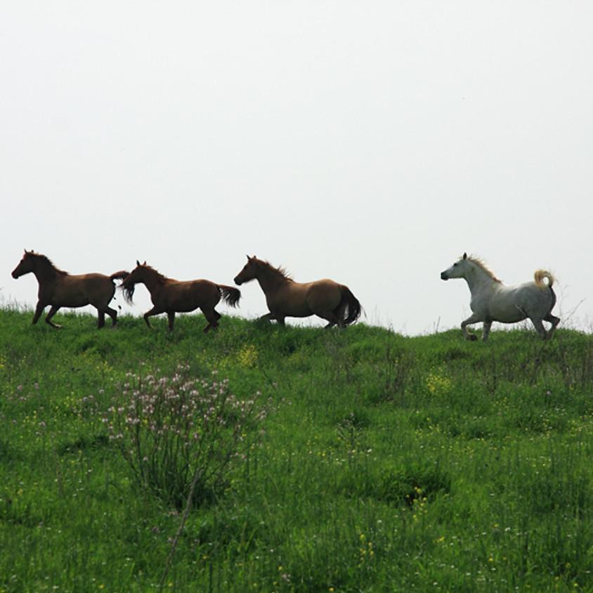 Horse Health 104