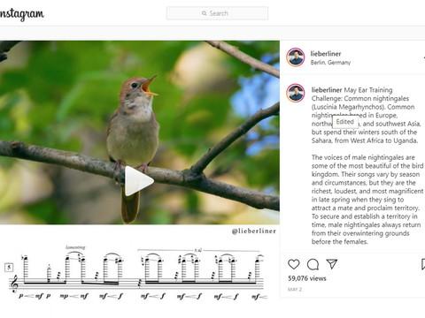 Bird Singing Music Transcription!