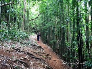 Hawaii Hiking Trail - Pu`u `Ohi`a