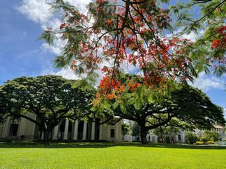 ハワイ州立図書館