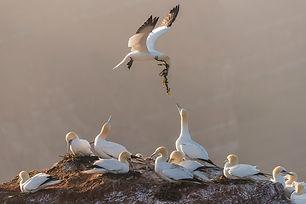 Lezing Mijn Natuurfotografie - Jeffrey Van Daele