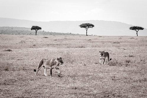 KENIA: HET BESTE VAN DE MASAI MARA
