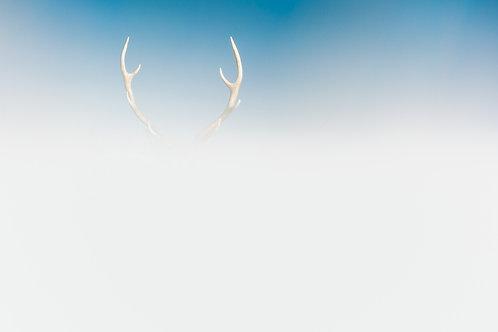 Sika Antlers