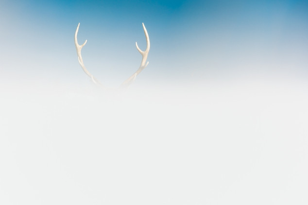 Japan, Sika Deer