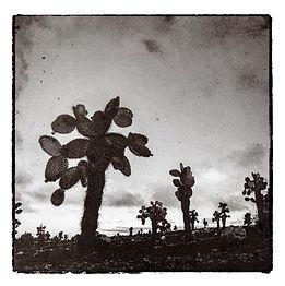 GalapagosFiles_ArbolDeCactus.jpg