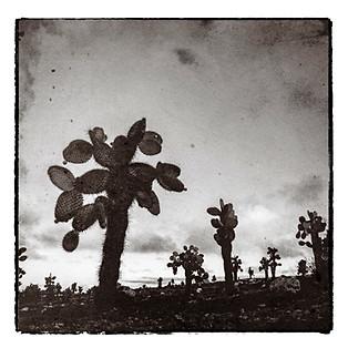 Arbol de Cactus