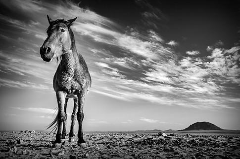 Wild horses of Namibia