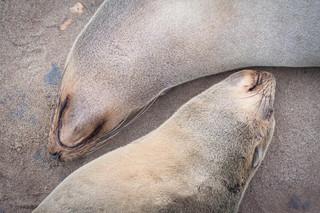 Symmetrical Seals