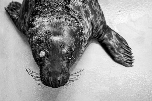 Exhausted Seal