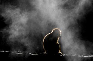 Japan, Snow Monkey