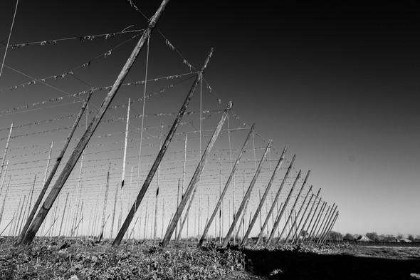 De biercultuur blijft leven in de Westhoek. Her en der verspreid zie je dan ook de vele hopplantages
