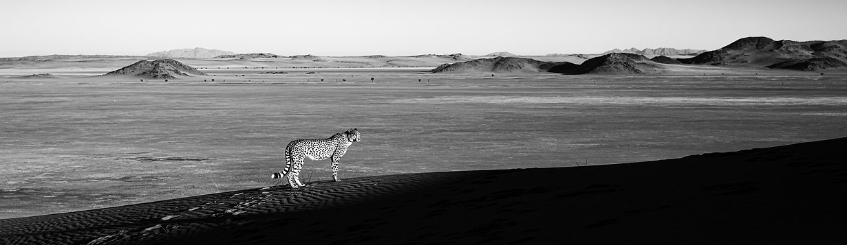 cheetahcover.jpg