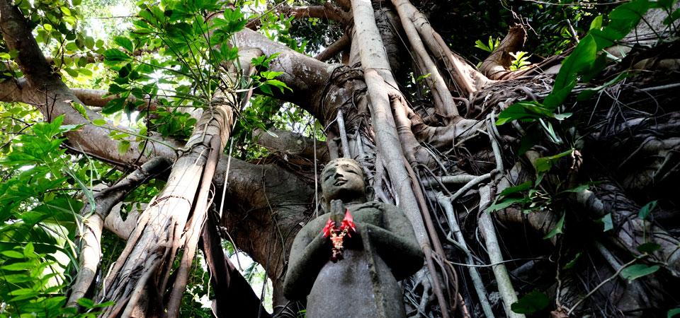 ThaiVedic Yoga Training